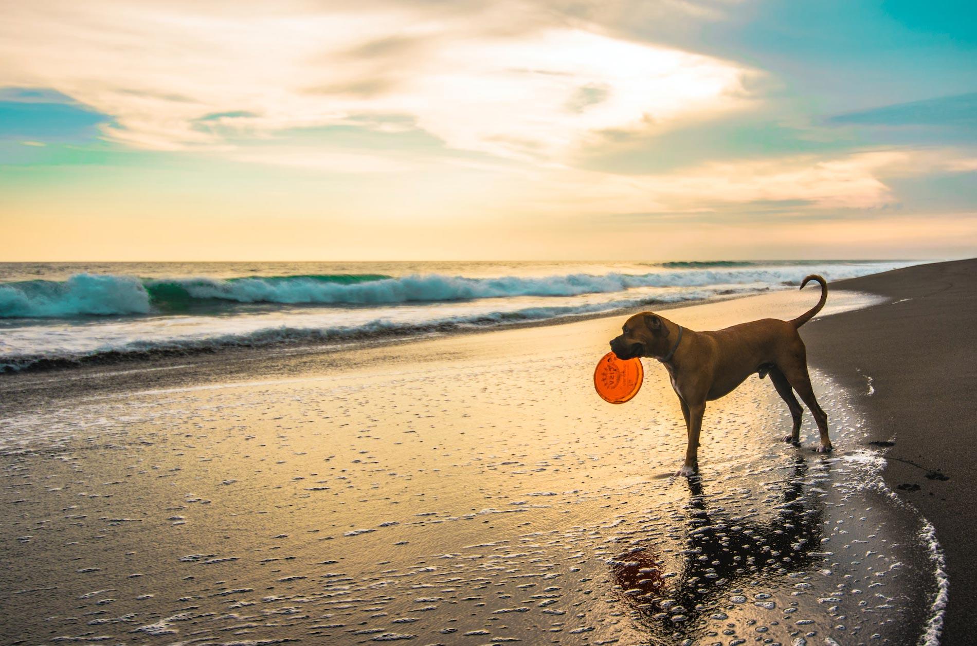 Hund am Strand - leider nicht überall erlaubt.