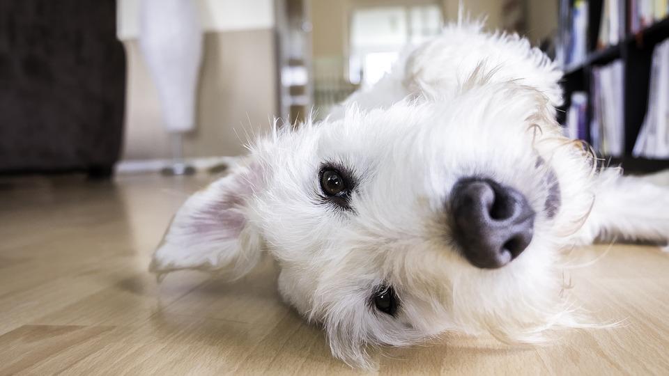 Hunde in Mietwohnungen